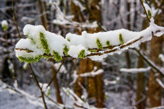 早期的春天在森林里 图库摄影
