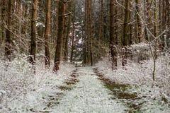 早期的春天在森林里 免版税库存图片