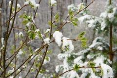 早期的春天在森林里 库存照片