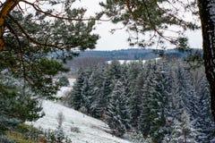 早期的春天在立陶宛 库存图片