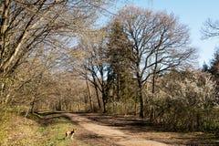 早期的春天在苏克塞斯森林地 库存照片