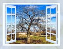 早期的春天开窗口视图  库存照片