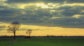 早期的春天或晚秋天领域或者草甸落日的光芒的 农村的横向 现出轮廓的树反对 图库摄影