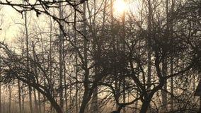 早期的春天早晨黑暗的日出在遗弃果树园在农场 股票录像