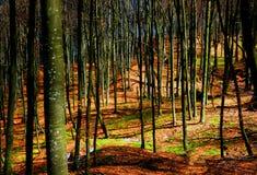 早期的春天森林 免版税库存照片
