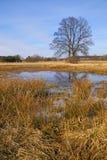 早期的春天的洪水草甸 免版税库存照片