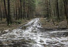 早期的春天肮脏的森林公路 库存照片
