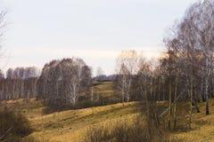 早期的春天自然 免版税库存照片