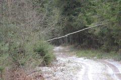 早期的春天道路在导致从村庄的雪新下落的雪的一个杉木森林里城市 免版税图库摄影