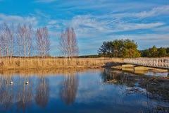 早期的春天,在一条镇静河的岸的光秃的树 免版税库存图片