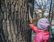 早期的春天 女孩提供了援助她的有坚果的手,并且灰鼠下降了在他后的树 库存图片