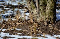 早期的春天 熔化的雪 库存图片