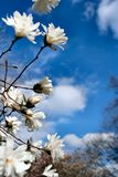 早期的春天 免版税库存照片