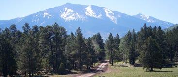 早期的森林公路夏天 免版税库存照片