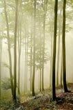 早期的森林有薄雾的早晨发出光线星&# 免版税库存图片