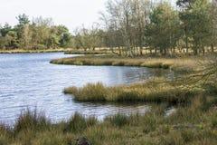 早期的湖早晨岸夏天 免版税库存图片
