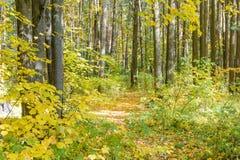 早期的秋天在森林里 库存照片