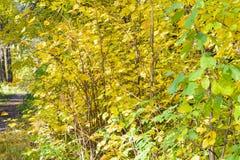 早期的秋天在森林里 图库摄影