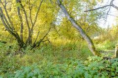 早期的秋天在森林里 库存图片