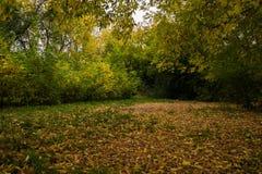 早期的秋天在森林 免版税库存图片