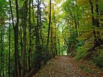 早期的秋天在Alpstein山脉倾斜的落叶林里和在莱茵河谷 库存图片