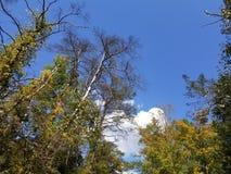 早期的秋天天空 库存照片