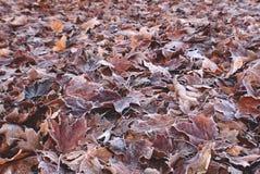 早期的秋天弗罗斯特 库存照片