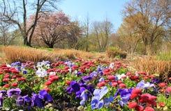 早期的花在城市停放春天 库存图片