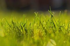 早期的草春天 库存照片