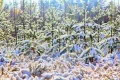 早期的雪在秋天森林里 免版税库存图片