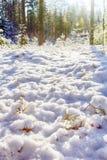早期的雪在秋天森林里 免版税库存照片