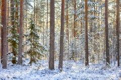 早期的雪在秋天森林里 库存图片