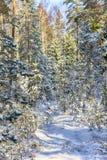 早期的雪在秋天森林里 库存照片