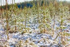 早期的雪在秋天森林里 图库摄影