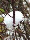 早期的雪秋天 免版税库存照片