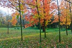 早秋天树丛横向 库存图片