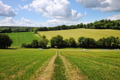 早英国横向农村夏天 库存图片
