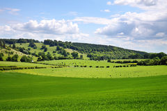 早英国横向农村夏天 免版税库存图片