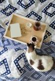 早餐在河床上 书、水罐和一杯咖啡在手工制造一个木的盘子的 在蓝色亚麻布的白色猫 免版税图库摄影