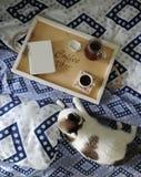 早餐在河床上 书、水罐和一杯咖啡在手工制造一个木的盘子的 在蓝色亚麻布的白色猫 免版税库存照片