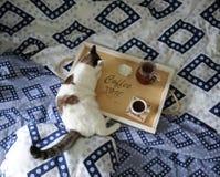 早餐在河床上 水罐和一杯咖啡在手工制造一个木的盘子的 在蓝色亚麻布的白色猫 免版税库存照片