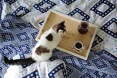 早餐在河床上 水罐和一杯咖啡在手工制造一个木的盘子的 在蓝色亚麻布的白色猫 图库摄影