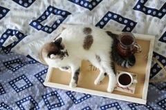 早餐在河床上 水罐和一杯咖啡在手工制造一个木的盘子的 在蓝色亚麻布的白色猫 库存照片
