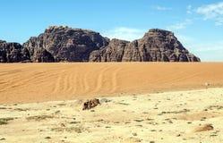 旱谷兰姆酒沙漠 免版税库存图片