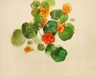 旱金莲属植物被绘的水彩 免版税图库摄影