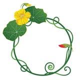 旱金莲属植物 库存例证