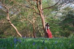 时兴的夫人在早期的春天倾斜反对一棵树在英国森林地,有在前景的会开蓝色钟形花的草的 库存图片