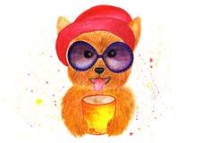时兴的约克夏狗 使用玻璃和帽子 免版税图库摄影
