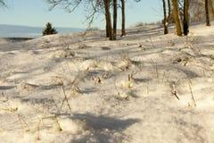时数横向季节冬天 照片 库存照片