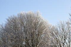 时数横向季节冬天 照片 库存图片